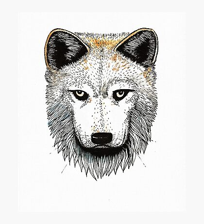 One Pack Wolf Photographic Print