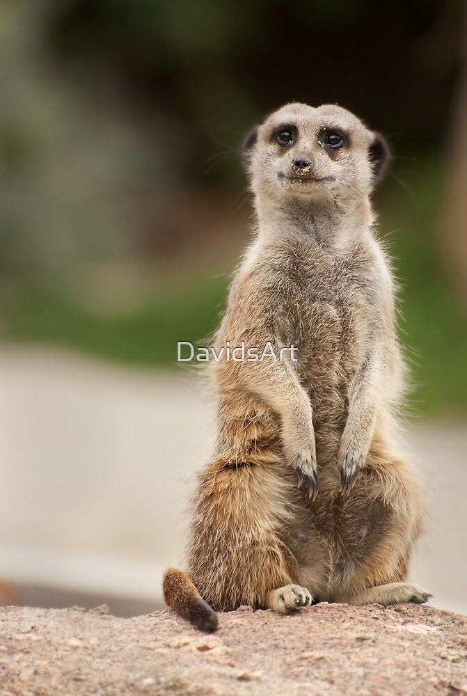 0334 Meerkat  by DavidsArt