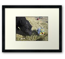 May Day Jobie Style! Framed Print
