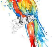 Wild Scarlet Macaw Sticker