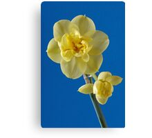 Yellow Narcissus Canvas Print