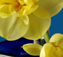 Narcissus on a Blue Bottle Sticker