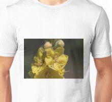 Verbascum giganteum (III) Unisex T-Shirt