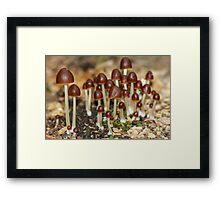 Mini Mushrooms Framed Print