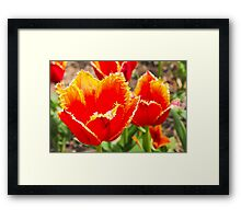 Spiky Flowers Framed Print