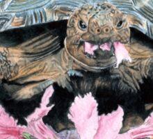 Roxy the Turtle Sticker