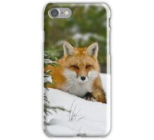 Red Fox In Snow iPhone Case/Skin