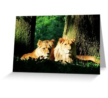 Lion in the sunshine Greeting Card