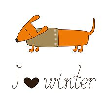 Winter dachshund by mborgali