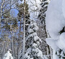 Beautiful snowy forest landscape, season concept, Alsace, France by Alexander Sorokopud