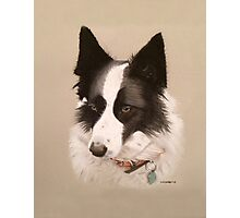 Mia the stunning Border Collie Photographic Print