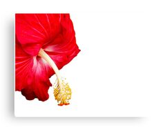 Red hibiscus flower on white. Canvas Print