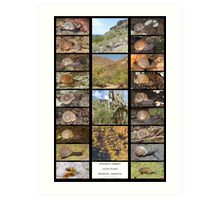 Sonoran Desert Land Snails of Phoenix, Arizona Art Print
