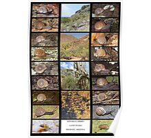Sonoran Desert Land Snails of Phoenix, Arizona Poster