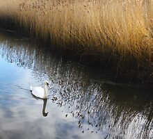 An Ugly Duckling No More by Joanne Pickering