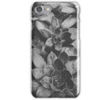 succulent iPhone Case/Skin