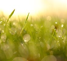 Morning dew by willgudgeon