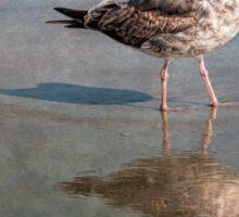 Seagull study Sticker