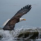 Bald Eagle Skimming The Wave by akaurora