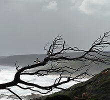 Skeleton in the Storm by metriognome