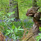 Foxy Tree Stump by relayer51