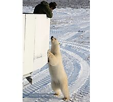 A Curious Polar Bear Photographic Print