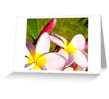 Frangipani closeup. Greeting Card