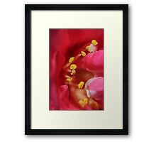 Colorful Flower and Yellow Stamen Framed Print