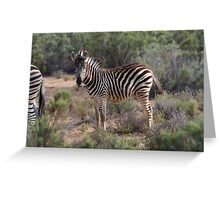Donkra at Aquila in South Africa Greeting Card