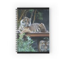 Tigers at Taronga Zoo in Sydney Australia Spiral Notebook