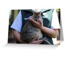Quokka Joey at Taronga Zoo Sydney Australia Greeting Card