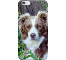 Beauty In Camouflage - Border Collie - NZ iPhone Case/Skin