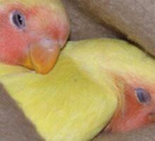 Snuggling Birds Sticker