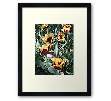 Tulip Time in Australia 14 Photograph by Heather Holland Framed Print