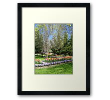 Tulip Time in Australia 11 Photograph  Framed Print