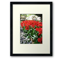 Tulip Time in Australia 12 Photograph by Heather Holland Framed Print