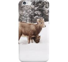 Bighorn sheep babies in snow iPhone Case/Skin