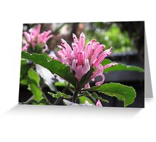 Romantic Pink Flower Greeting Card