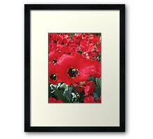 Tulip Time in Australia 4 Photograph by Heather Holland Framed Print