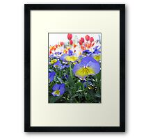 Tulip Time in Australia 5 Photograph by Heather Holland Framed Print