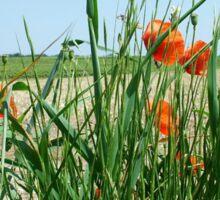 Poppies Bloomimg Field Edge Sticker