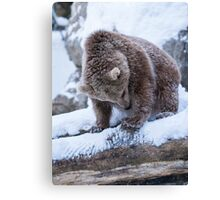 Baby bear discovers snow Canvas Print