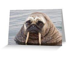 Walrus pug Greeting Card