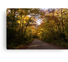 Forest Road - a Joy Ride Into Autumn Canvas Print
