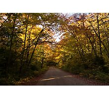 Forest Road - a Joy Ride Into Autumn Photographic Print