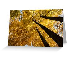 Golden Canopy - Three Trees Greeting Card