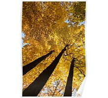 Golden Canopy - Three Trees Vertical Poster