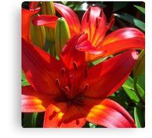 Two Cathedral liliies  Canvas Print