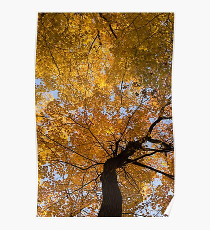 Golden Canopy - Twisted Tree Trunk Vertical Poster