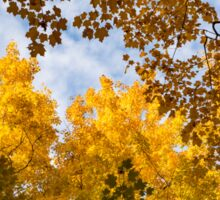 Golden Autumn Canopy - a Window to the Sky Horizontal Sticker